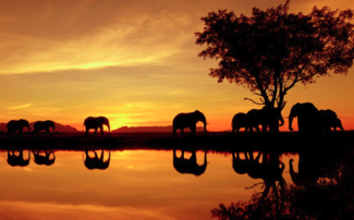 Elephants in the Kruger, South Africa