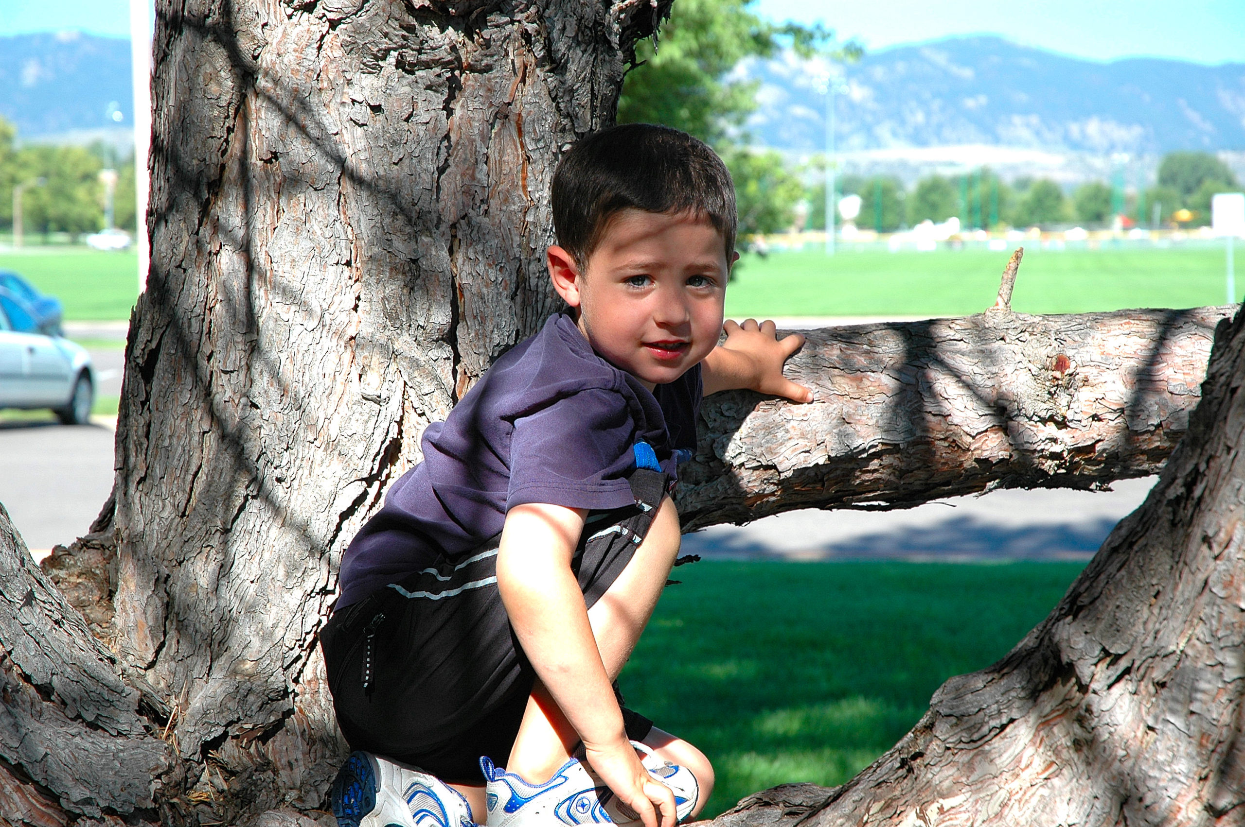 Nevan Doig watching dad from a tree at the cricket at CSU